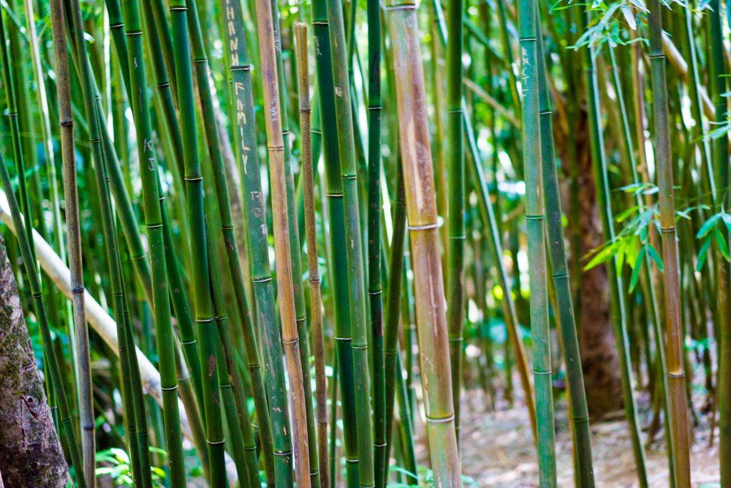 Bambous Manoa Falls