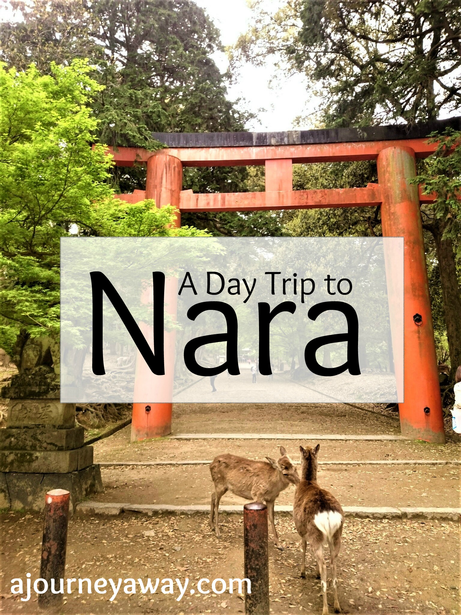A day trip to Nara, Japan