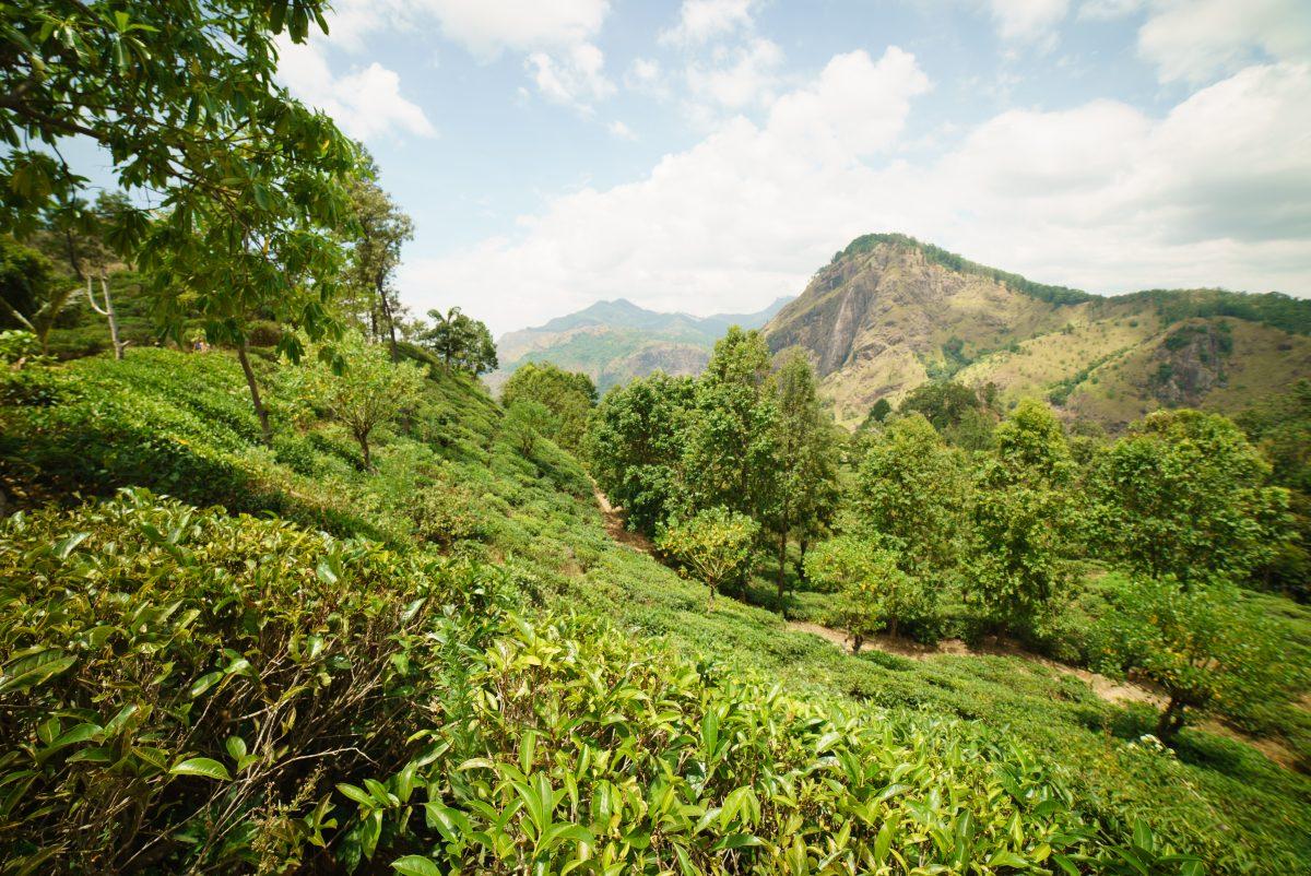 Little Adam peak, Sri Lanka