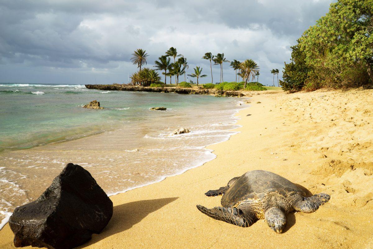 Plage d'Haleiwa Ali'i, Oahu, Hawaï